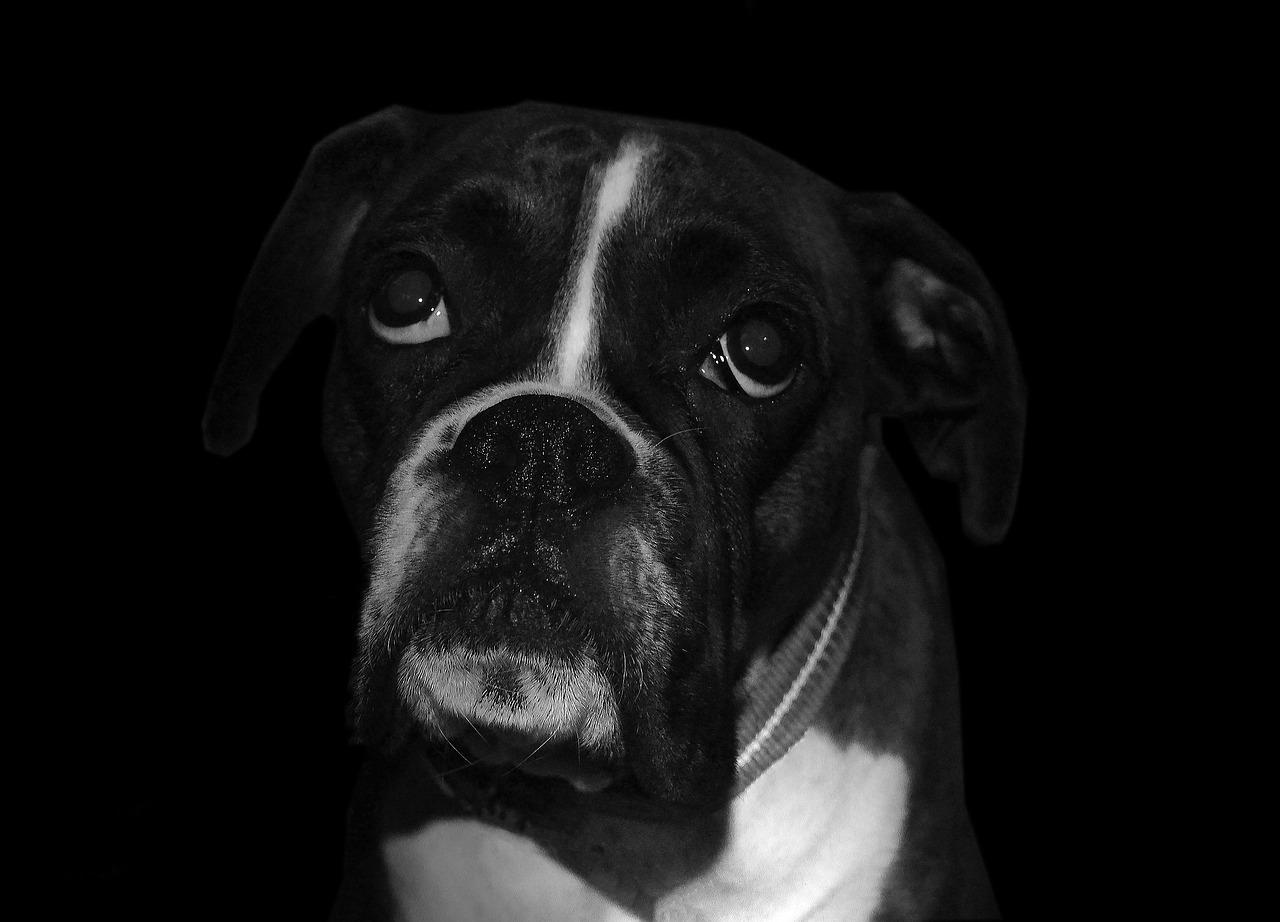 Hình ảnh chó buồn cực đẹp