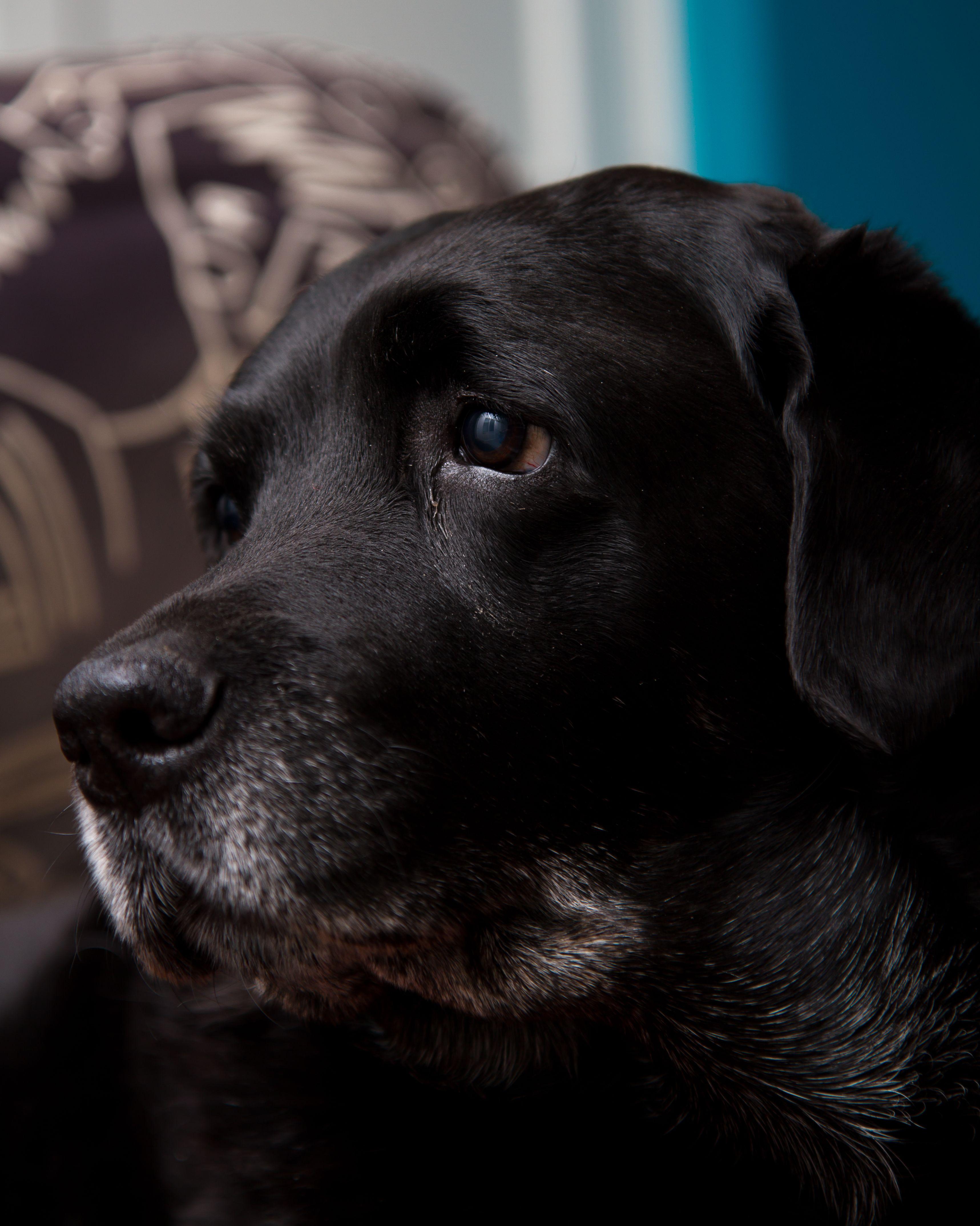 Hình ảnh chú chó buồn nhìn ra ngoài