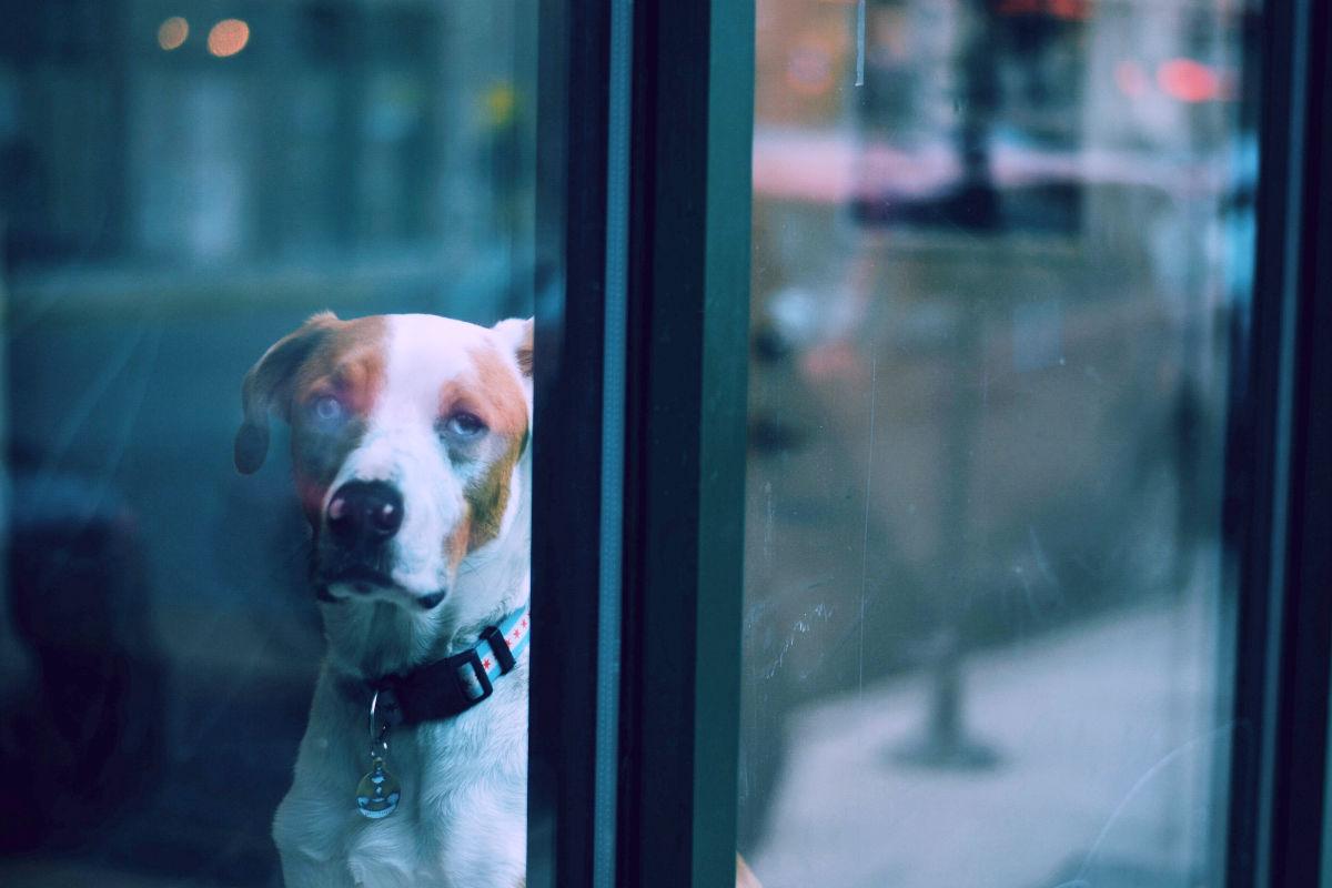 Hình ảnh chú chó buồn sau khung cửa kính