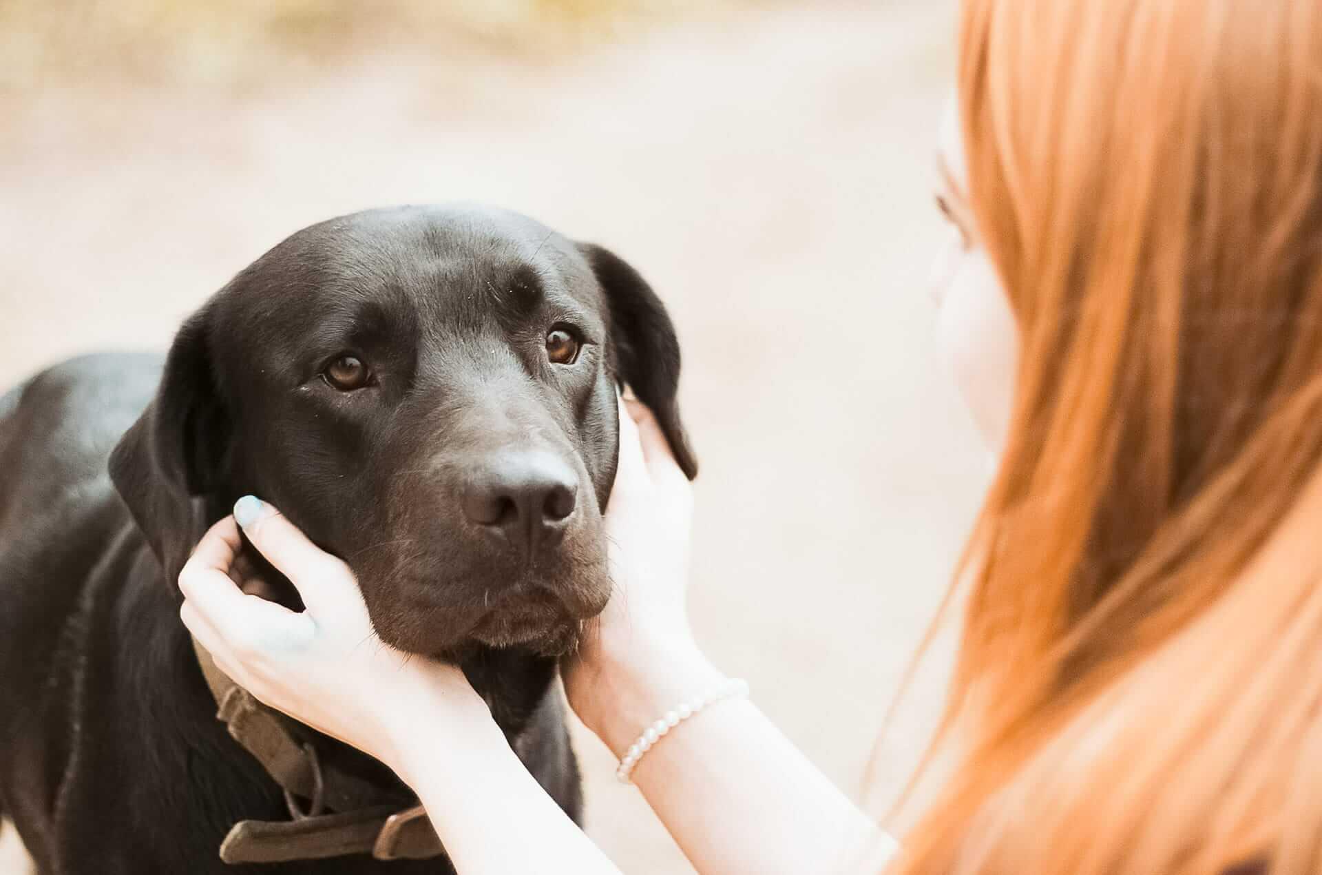 Hình ảnh chú chó đen buồn