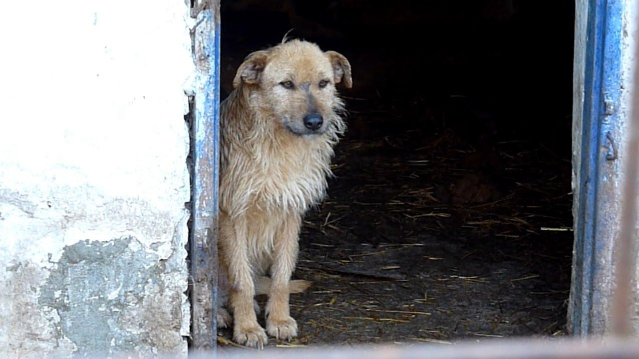 Hình ảnh chú chó xù lông buồn bã