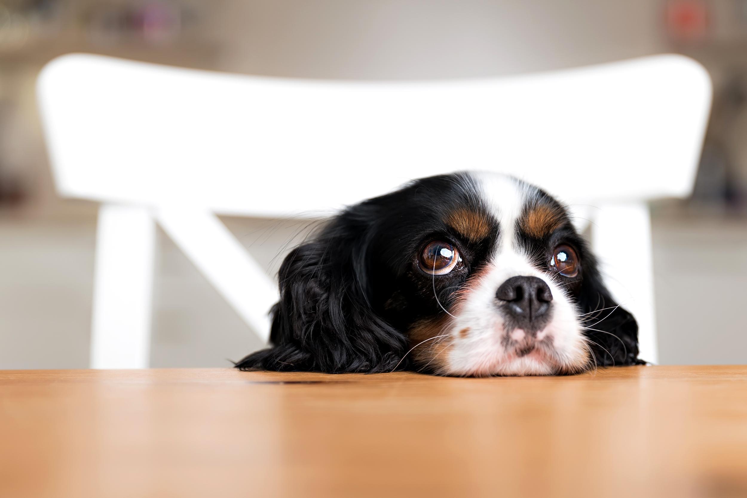 Hình ảnh chú cún buồn đẹp