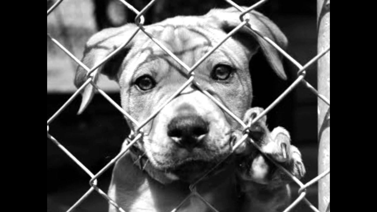 Hình chú chó buồn sau song sắt