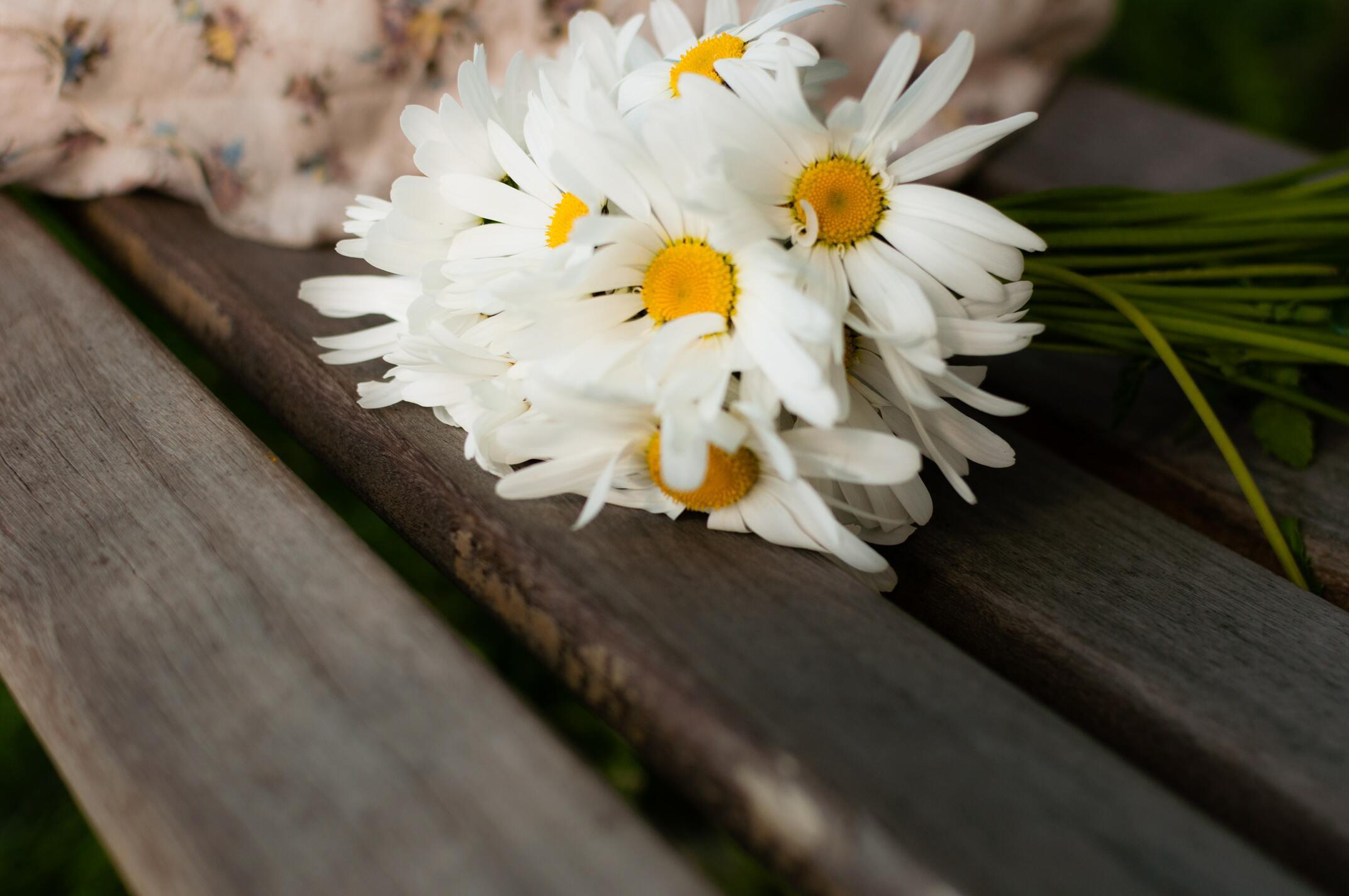 Ảnh hoa cúc dại cực đẹp