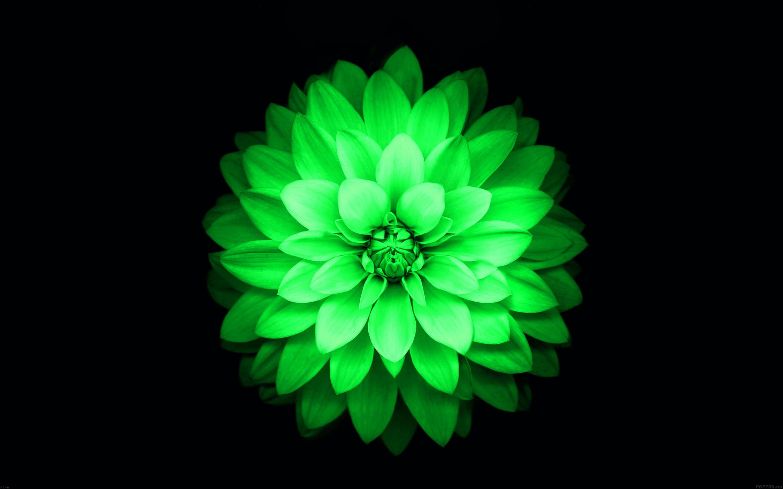Ảnh hoa sen xanh lá cực chất