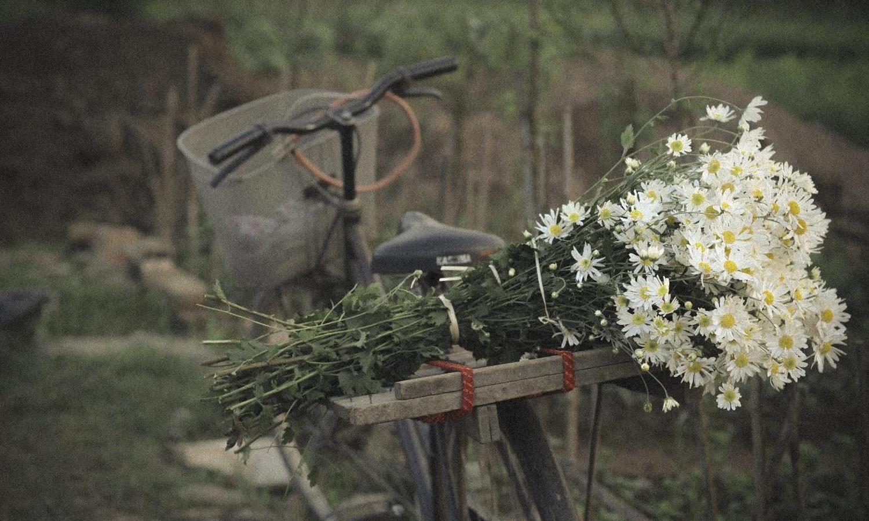Hình ảnh bó hoa cúc dại