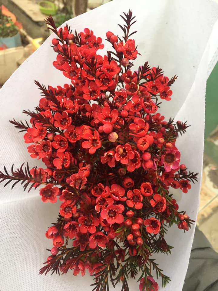 Hình ảnh bó hoa mai đỏ