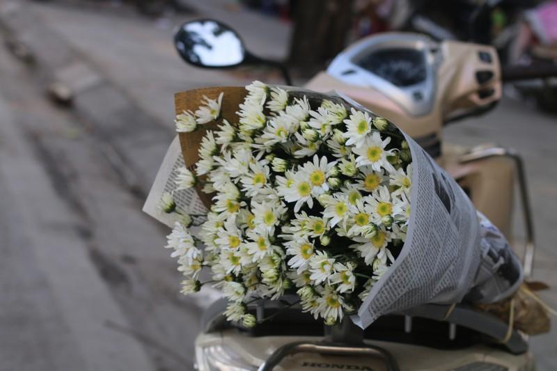 Hình ảnh hoa cúc dại đẹp
