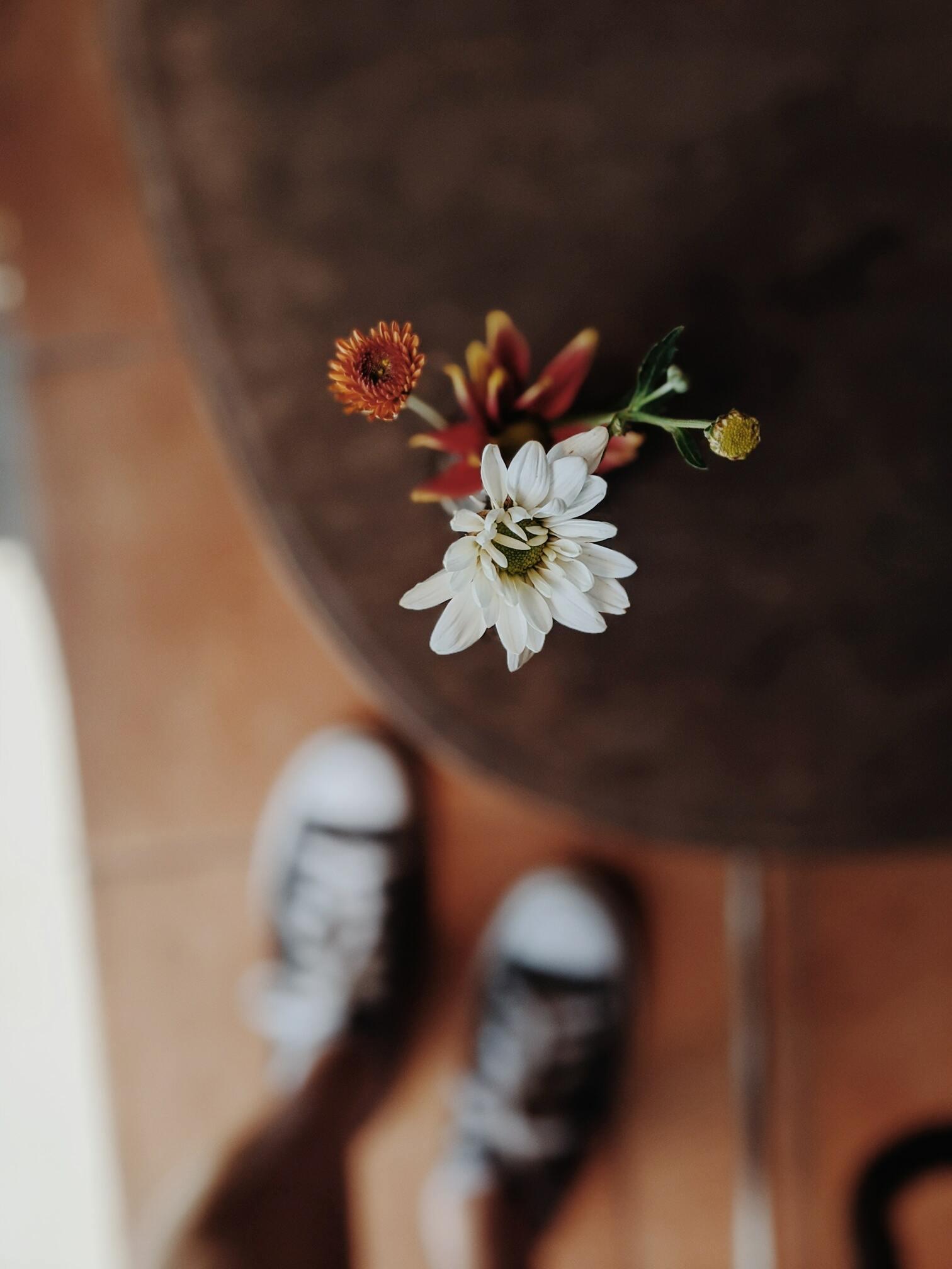 Hình ảnh hoa cúc hoạ mi trắng