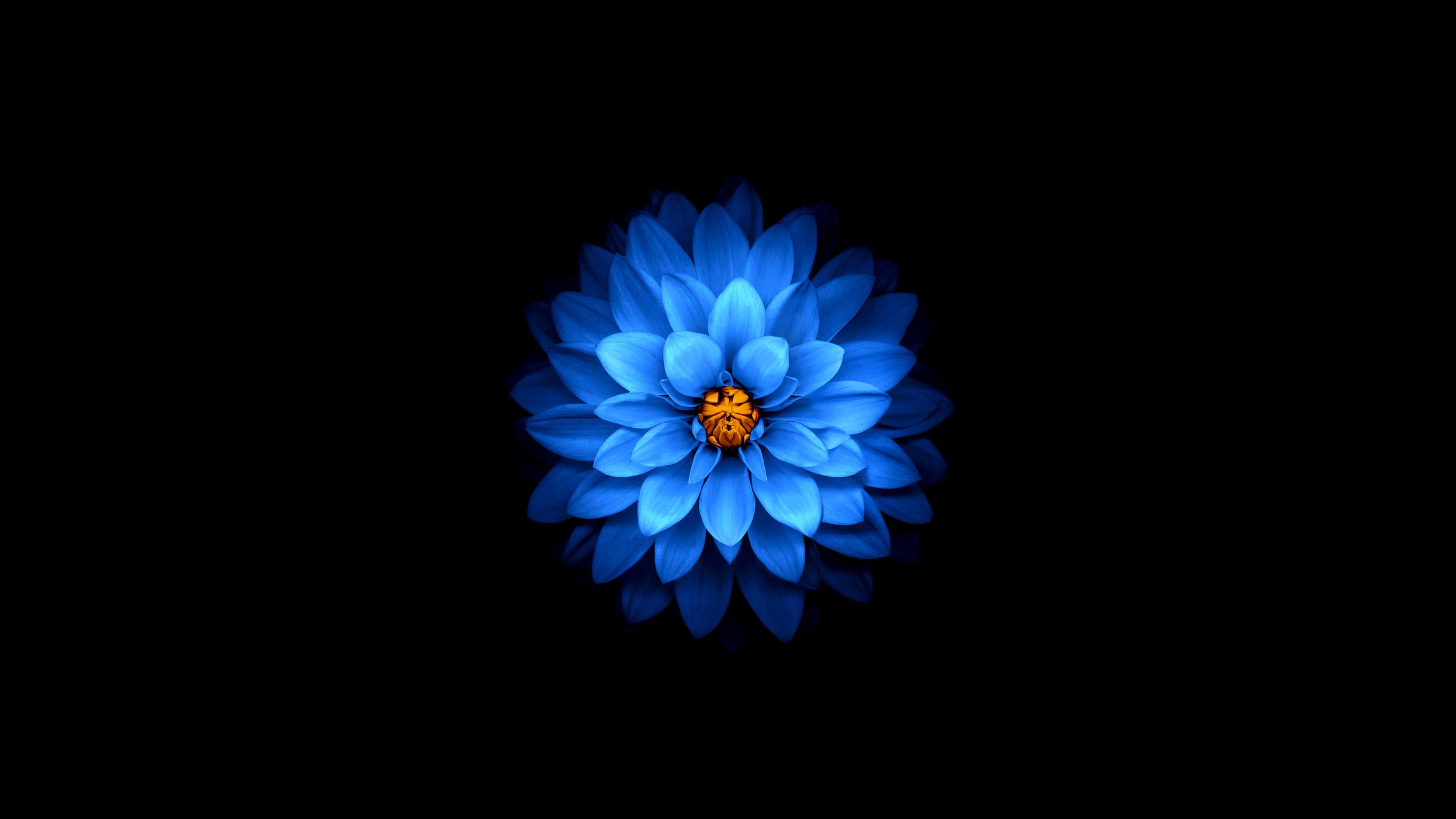 Hình ảnh hoa sen xanh dương đẹp