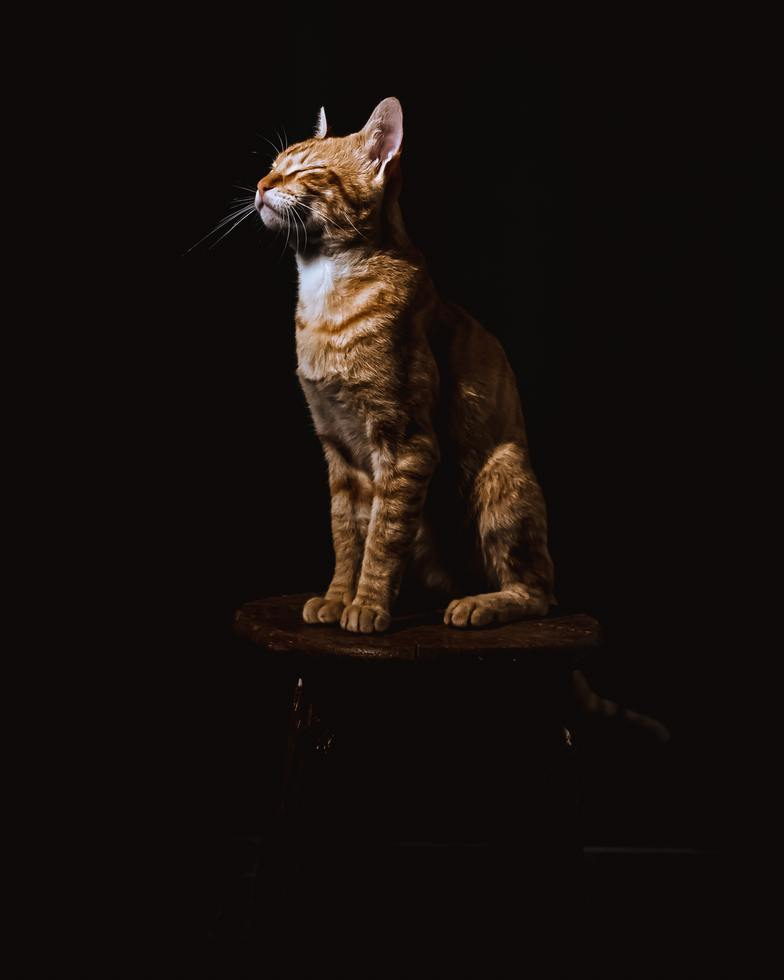 Ảnh mèo mướp nghệ thuật