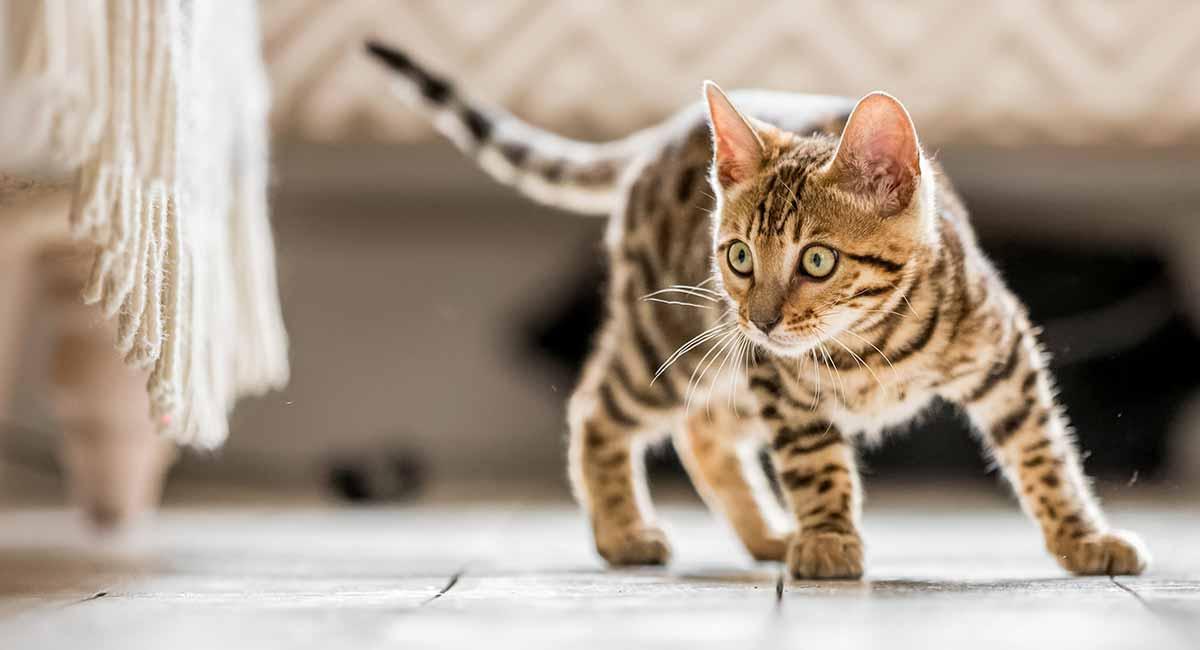 Hình ảnh mèo Cute