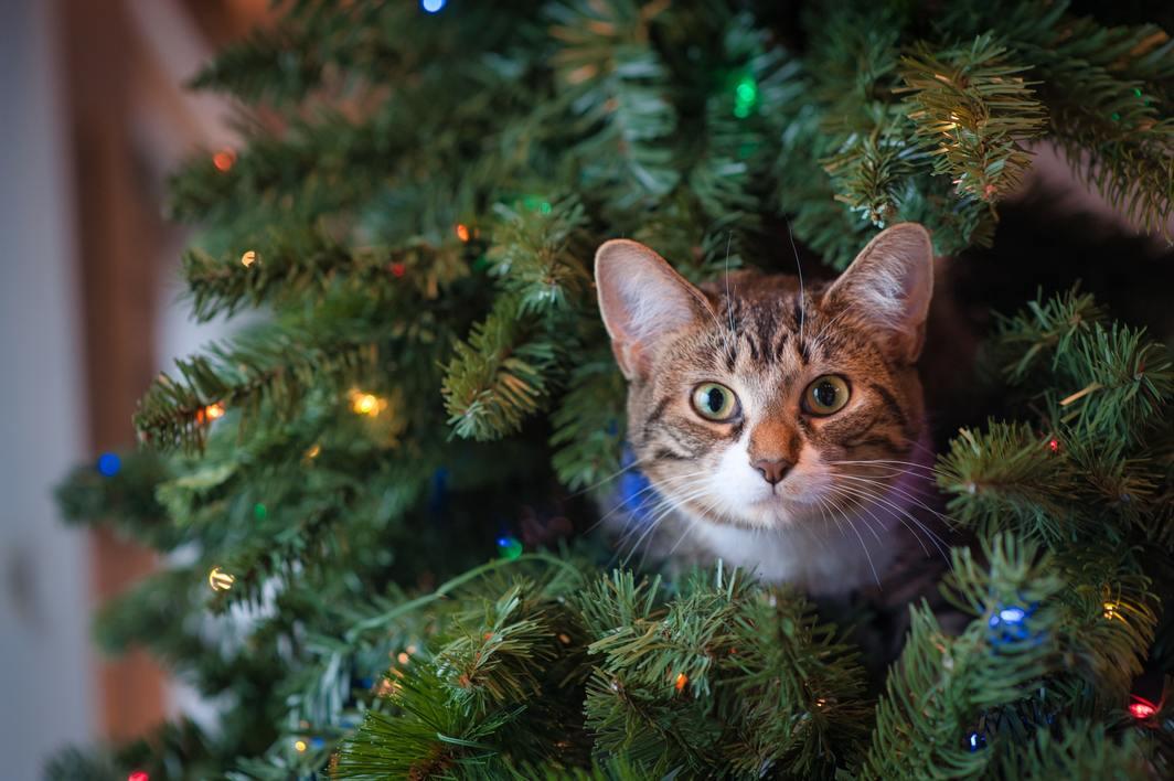 Hình ảnh mèo dễ thương cực đẹp