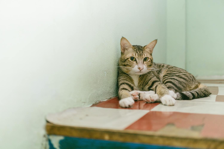 Hình ảnh mèo mướp bé xinh