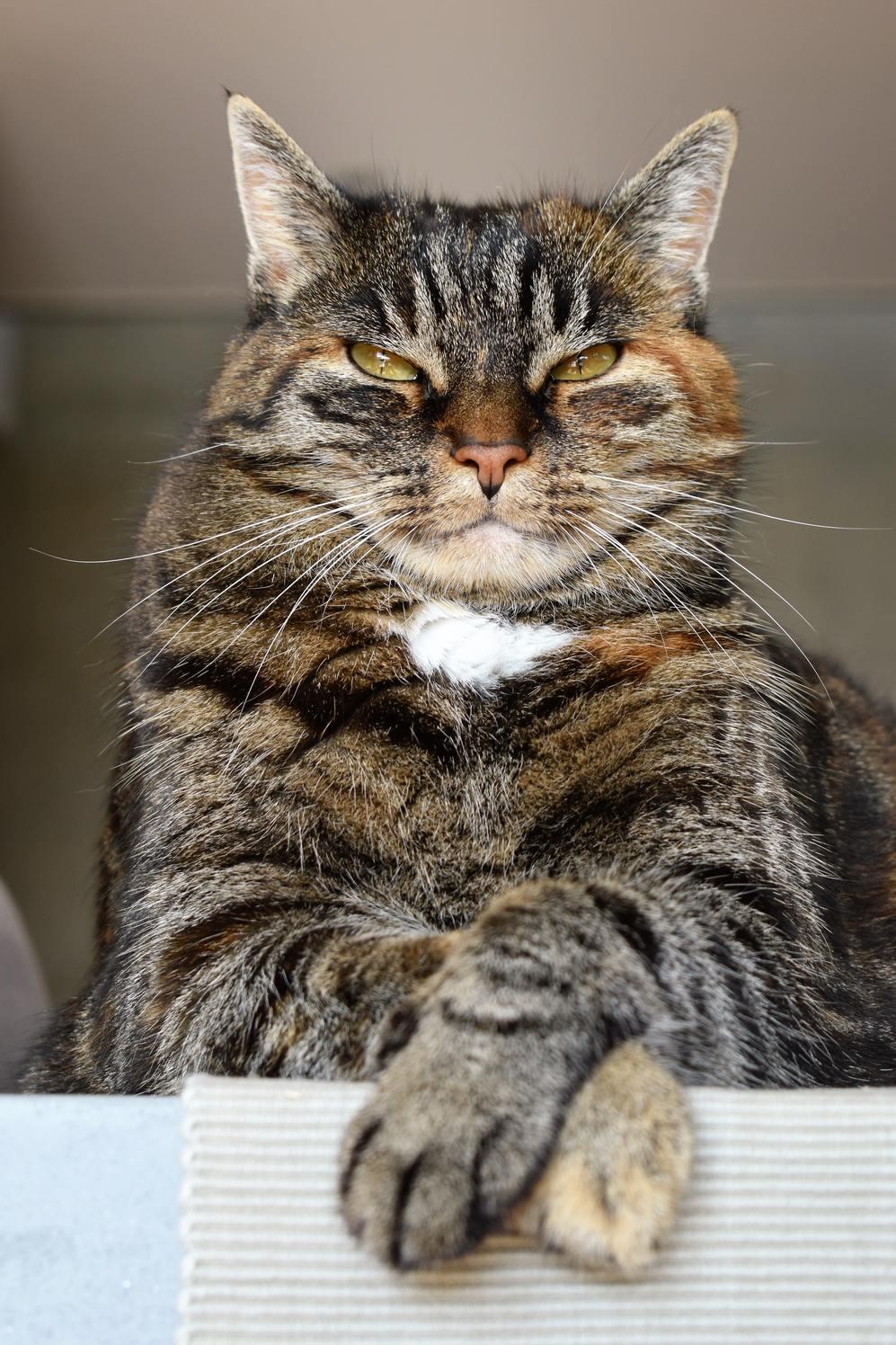 Hình ảnh mèo mướp cực chất