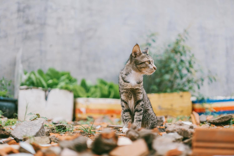 Hình ảnh mèo mướp đáng yêu nhất