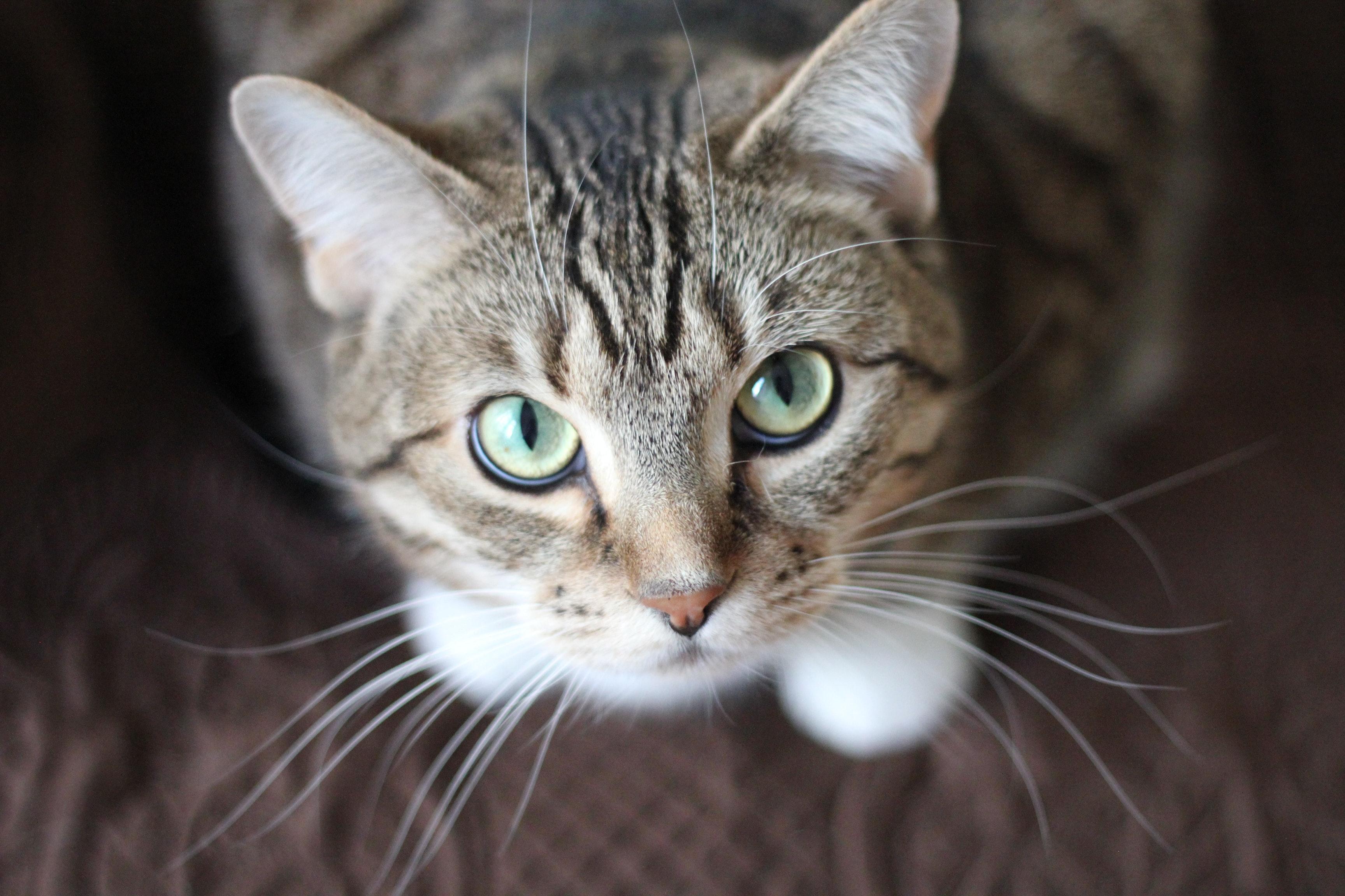 Hình ảnh mèo mướp dễ thương