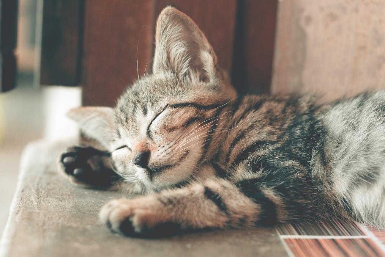 Hình ảnh mèo mướp ngủ đẹp