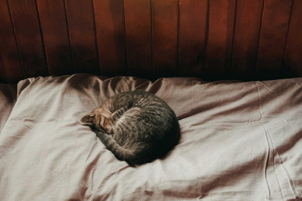 Hình ảnh mèo mướp ngủ nướng