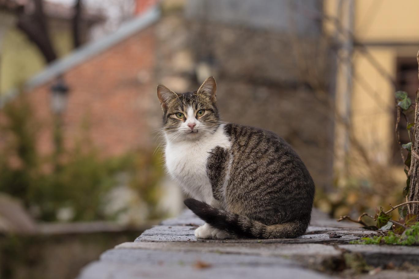 Hình ảnh mèo ta dễ thương