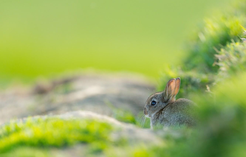 Background thỏ con trên nền cỏ xanh