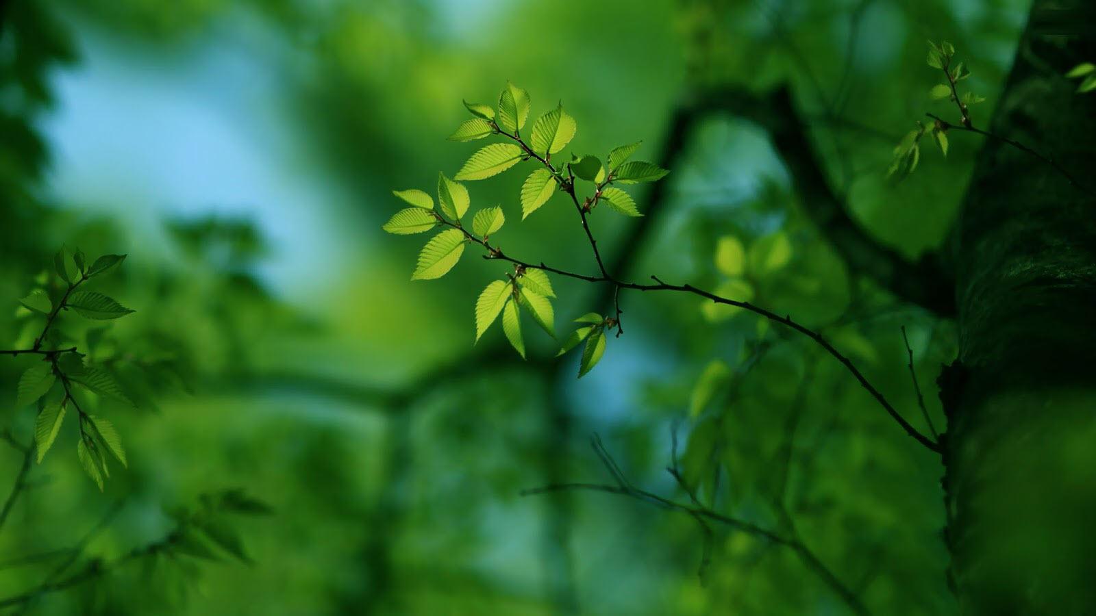 Hình nền xanh lá cây đẹp, độc