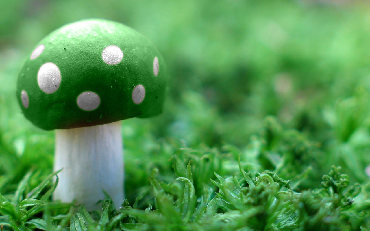 Hình nền xanh lá cây đẹp nhất quả đất