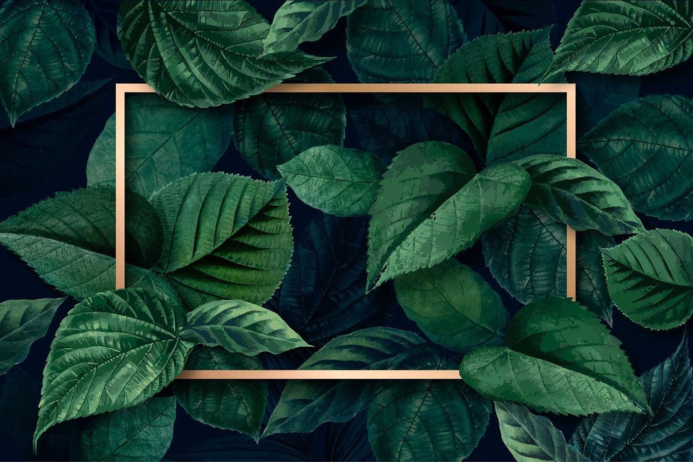 Hình nền xanh lá đẹp nhất HD