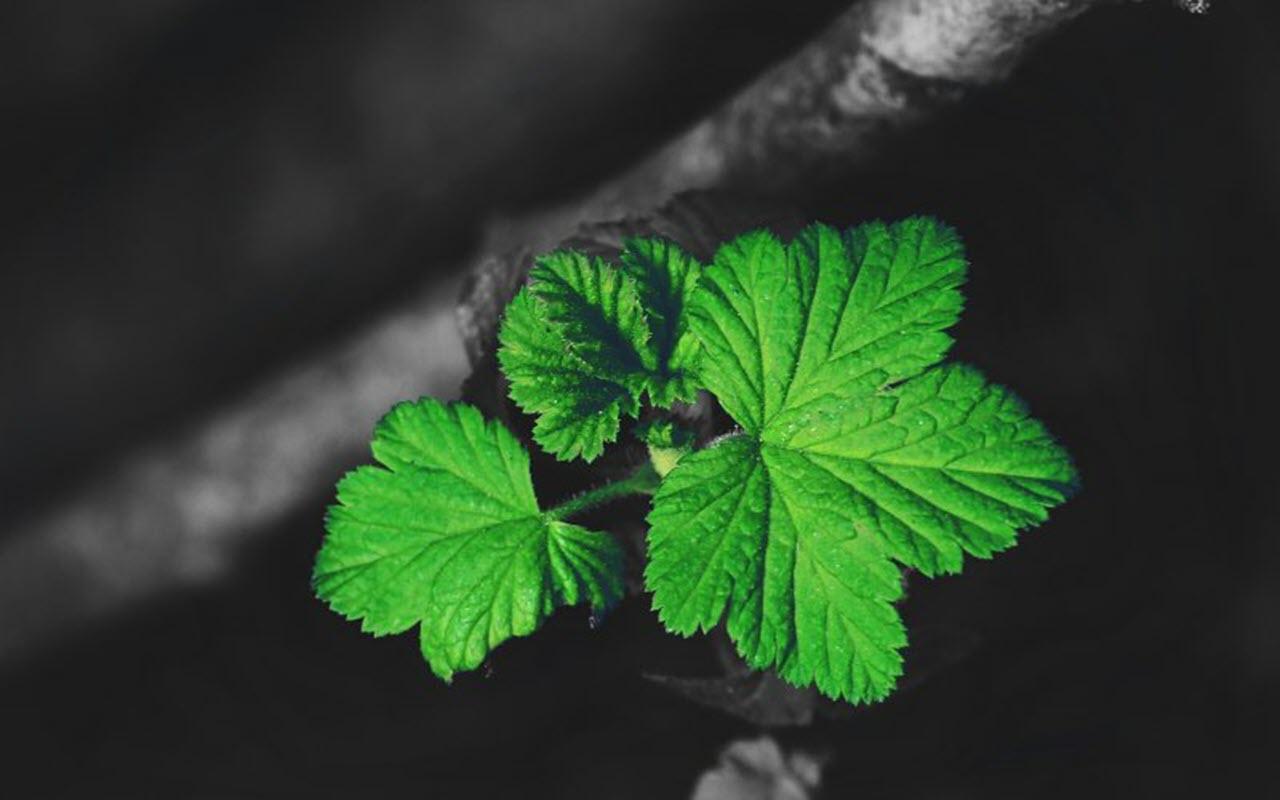 Small green leaves wallpaper Full HD