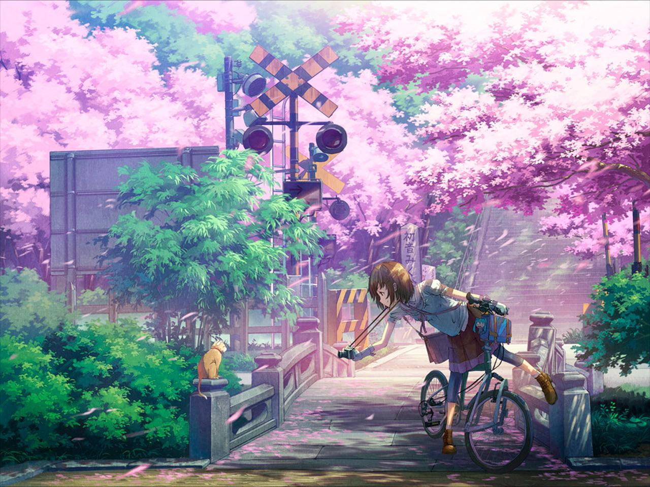 Ảnh hoa anh đào anime đẹp nhất