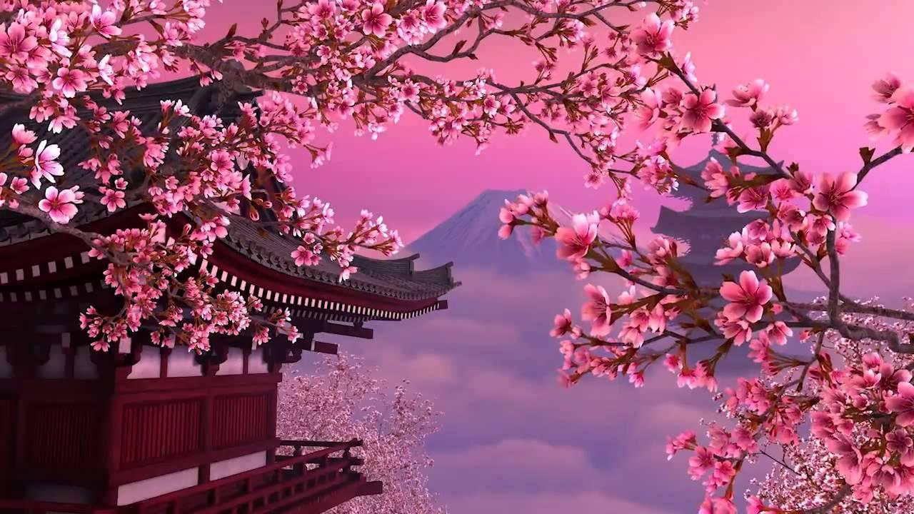 Ảnh hoa anh đào Nhật Bản trong anime đẹp
