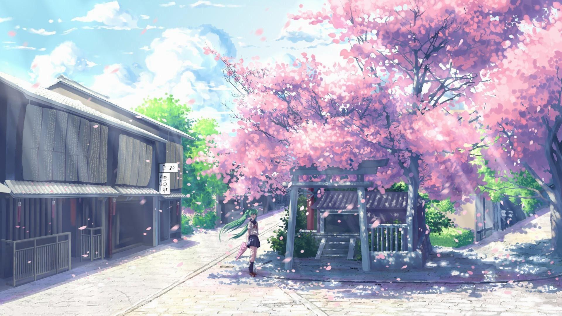Anime Cherry Blossom Images