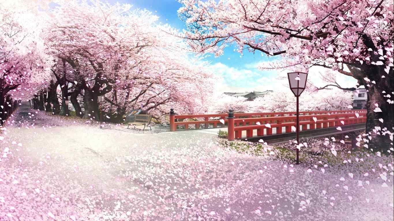 Blossom anime