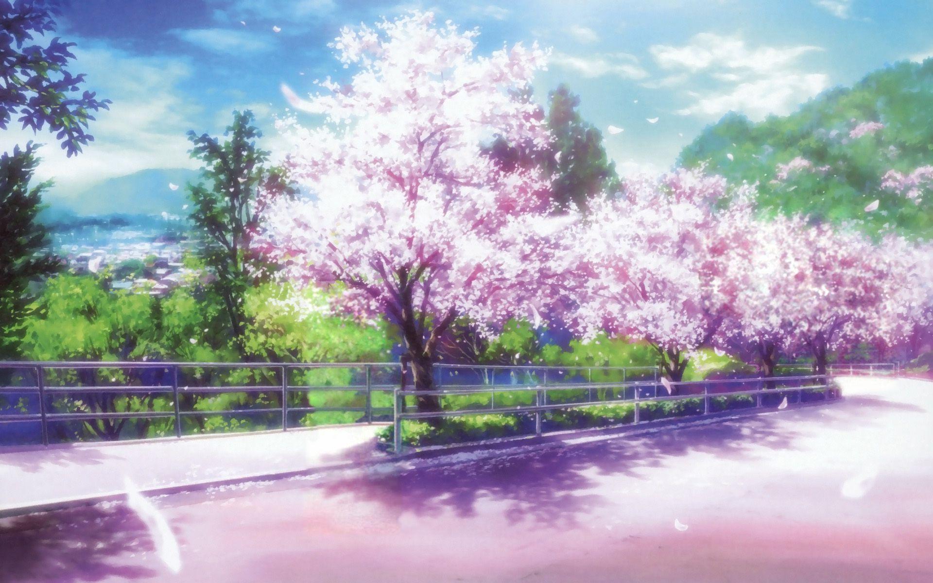 Cherry Blossoms Anime