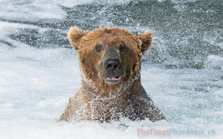 Hình ảnh gấu đẹp nhất