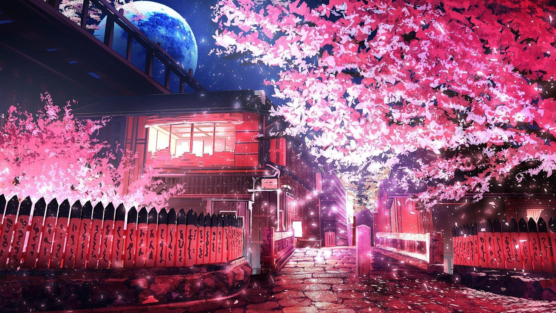 Khung cảnh hoa anh đào buổi tối trong anime
