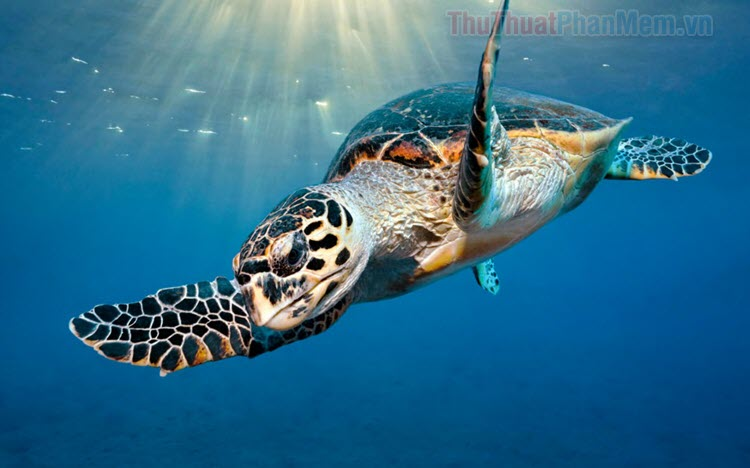 Hình ảnh con rùa đẹp