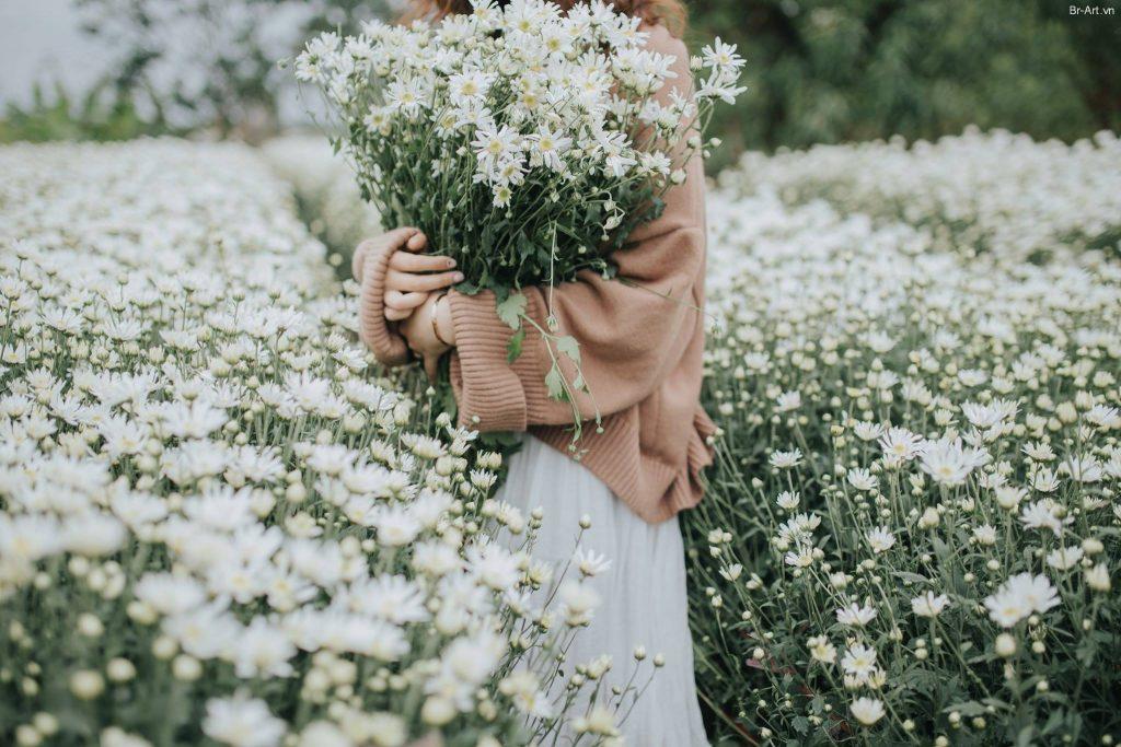 Ảnh chụp hoa cúc họa mi trắng đẹp nhất