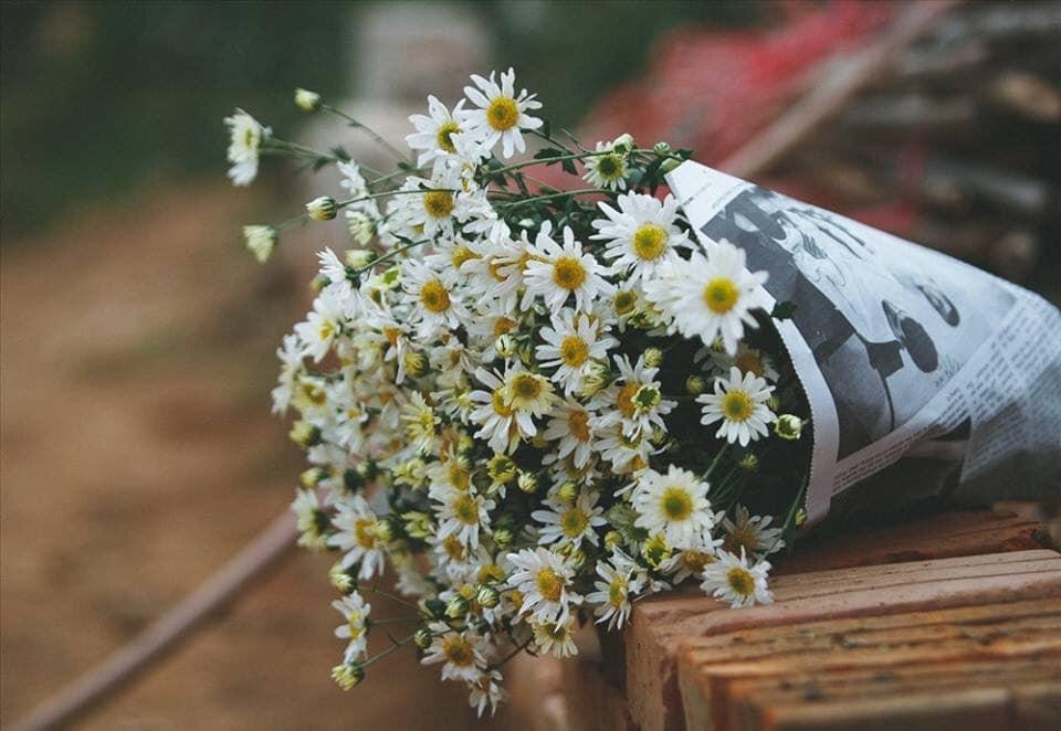 Ảnh đẹp nhất về hoa cúc trắng