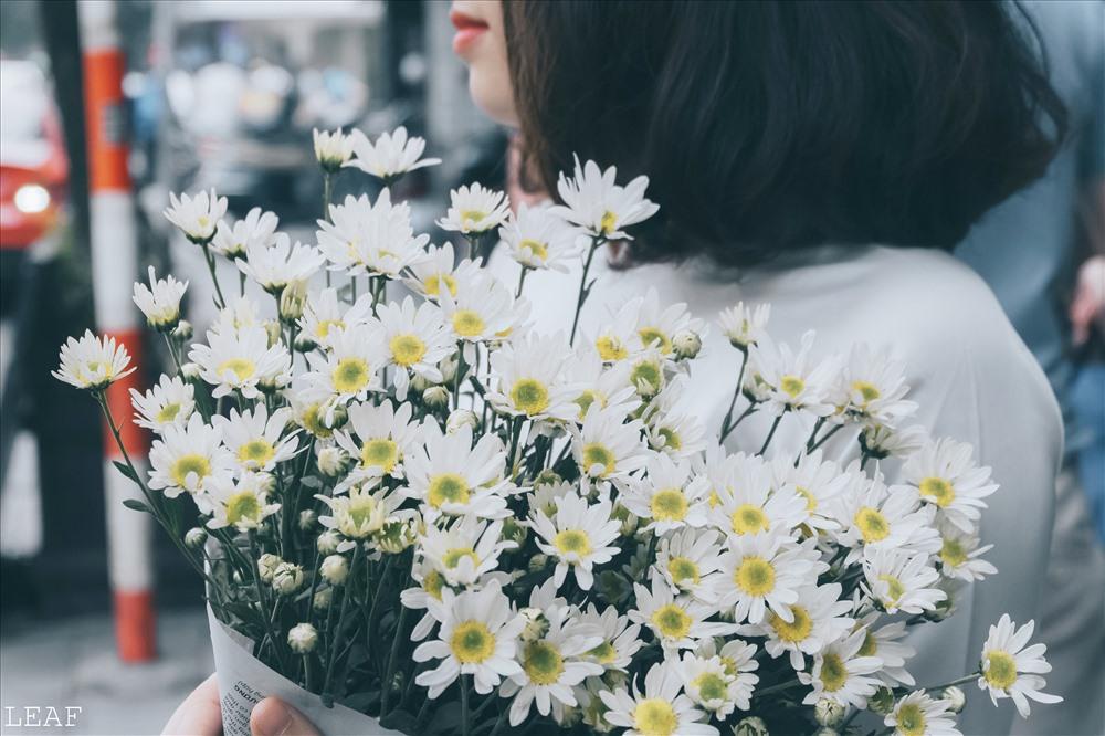 Ảnh hoa cúc họa mi trắng đẹp