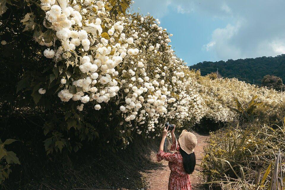 Ảnh hoa cúc núi cực đẹp