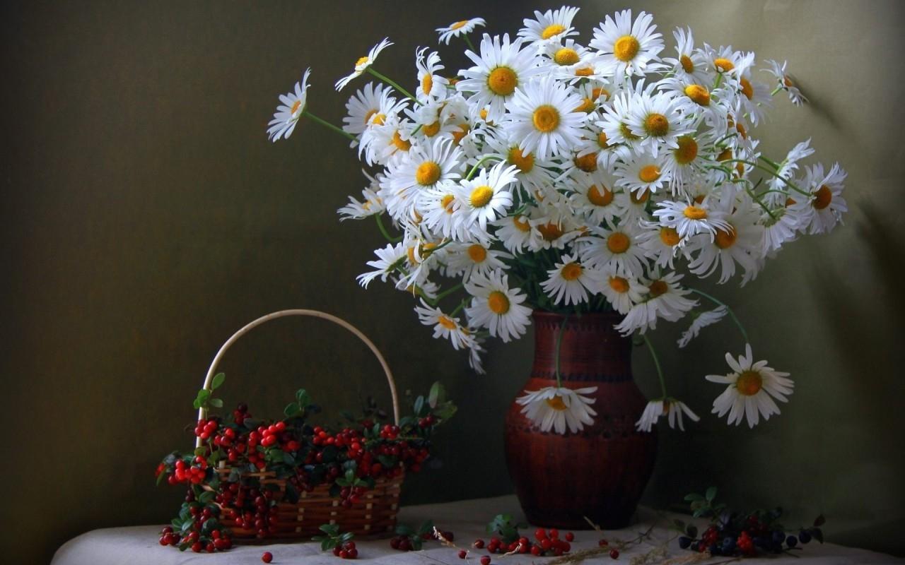 Ảnh hoa cúc trắng để bàn đẹp nhất