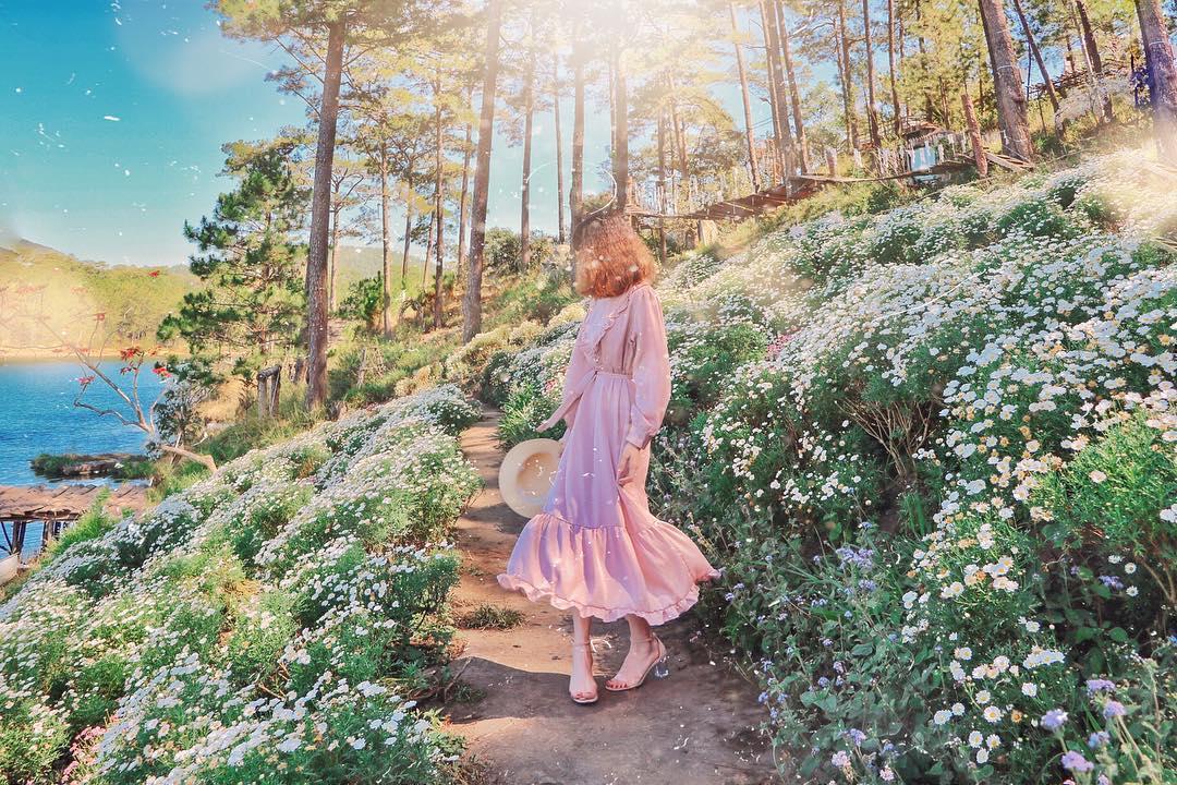 Ảnh vườn hoa cúc trắng ở Đà Lạt