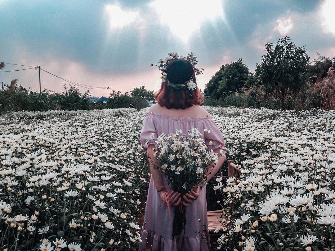 Hình ảnh hoa cúc trắng cực đẹp