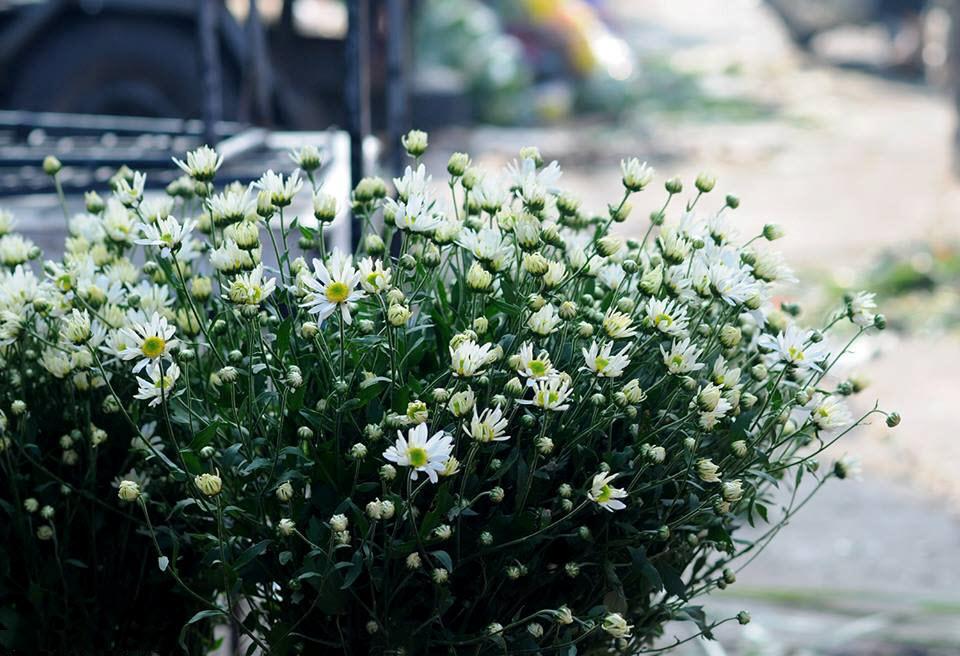 Hình hoa cúc trắng đẹp