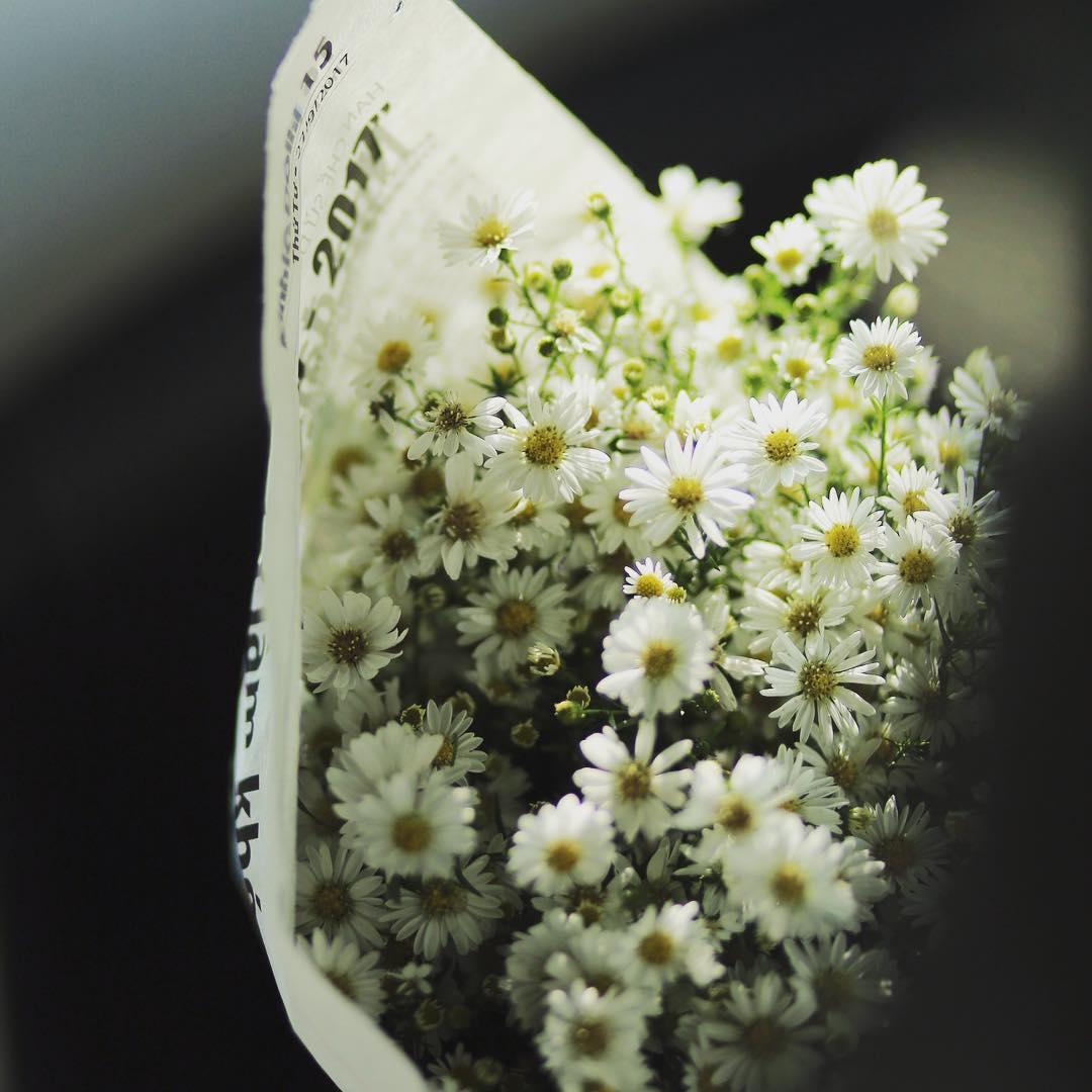 Ngỡ ngàng vẻ đẹp hoa cúc trắng