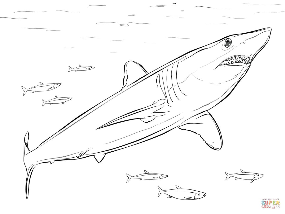 Tranh tô màu cá mập đẹp nhất cho bé