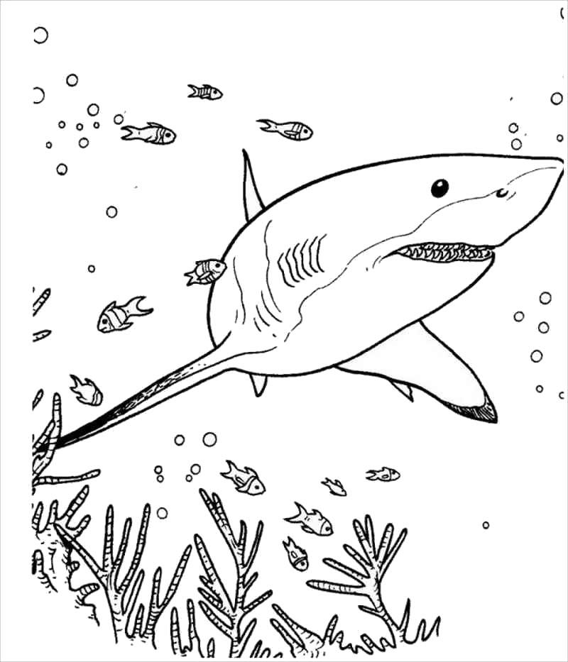 Tranh tô màu cá mập và đại dương