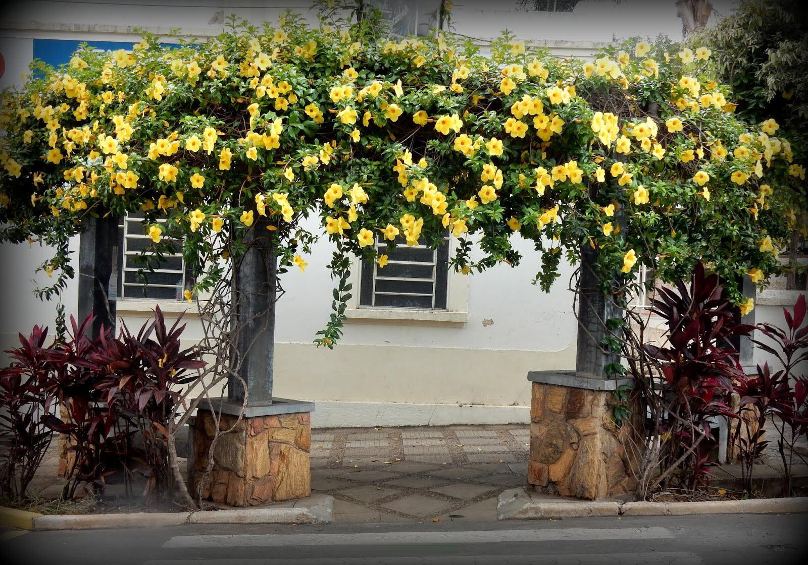 Ảnh chiếc cổng hoa Quỳnh Anh