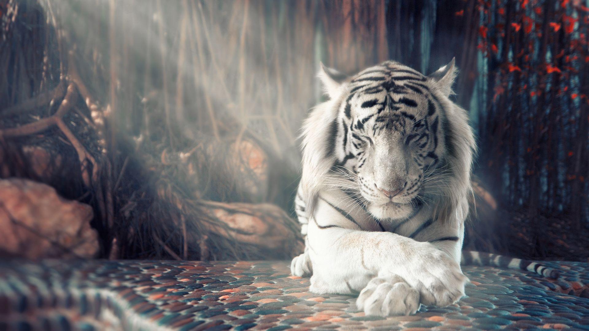 Ảnh con hổ trắng đẹp